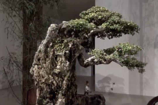 Kenali lebih dalam seni tanaman bonsai