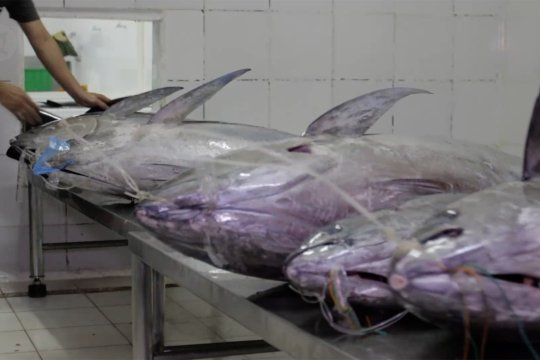 Ekspor komoditi perikanan Sumbar 2020 Rp26,3 miliar