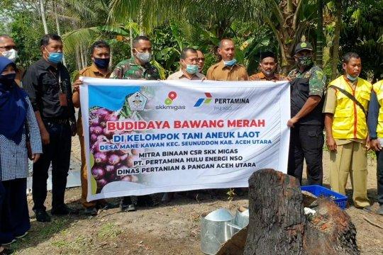 Aceh Utara dorong pengembangan budi daya bawang merah di pesisir
