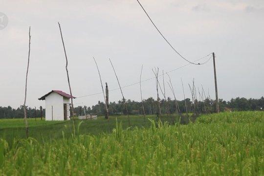 Listrik Masuk Sawah dorong produktivitas pertanian Sumsel