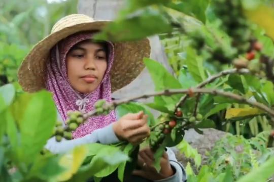 Pertanian jadi sektor utama Riau di tengah pandemi