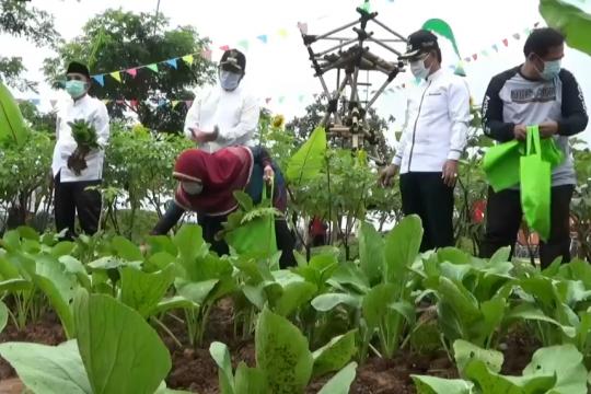 Wali Kota Tangerang bagikan hasil panen Eco Farm Cisadane