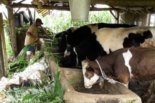 Waspadai kesehatan hewan ternak saat musim hujan