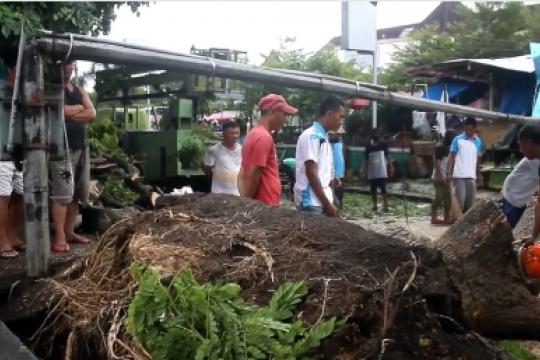 Pepohonan tumbang robohkan tiang listrik & rusak kios di Ternate