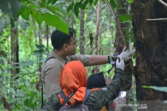 Taman Biodiversitas kembalikan anggrek alam spesies meratus