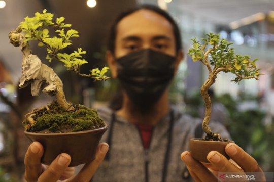 Guru Besar IPB dorong pengusaha tanaman hias tembus pasar global
