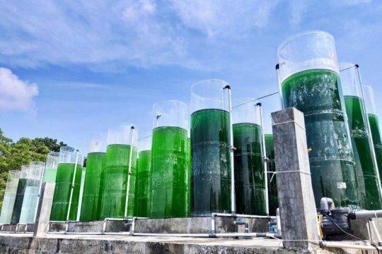 KKP kembangkan teknologi lesatkan produksi massal mikroalga