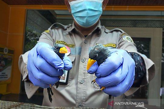 Karantina Pertanian Surabaya sita burung dan kura-kura asal Makasar