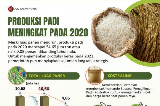Produksi padi meningkat pada 2020