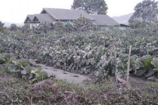 Abu vulkanik Sinabung meliputi delapan desa di Karo