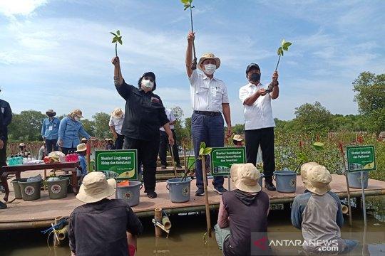 Rehabilitasi mangrove, KLHK dapat tambahan anggaran Rp1,52 triliun