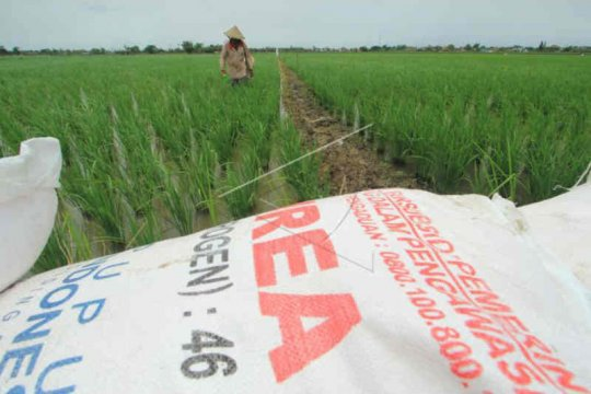 Dinas Pertanian Cirebon: kebutuhan pupuk subsidi membengkak