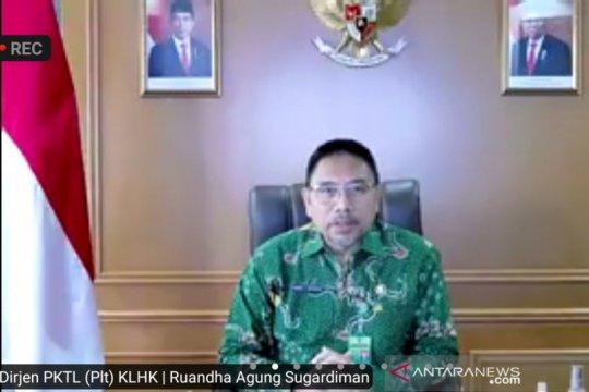 Deforestasi Indonesia turun 75,03 persen pada periode tahun 2019-2020