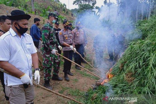 Tim gabungan musnahkan 5 hektare ladang ganja di Aceh Utara