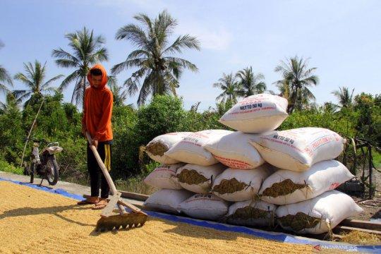 Bulog  diharapkan serap penuh panen padi petani