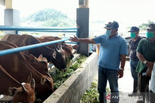 Menilik tekad pemerintah jadikan Buol penyuplai sapi pedaging