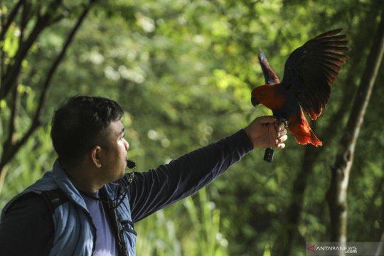 Komunitas pecinta burung paruh bengkok