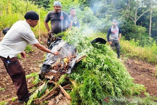 Polisi musnahkan tiga Hektare ladang ganja di Nagan Raya Aceh