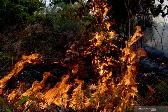 Kebakaran hutan-lahan telah meliputi area seluas 657 hektare di Riau