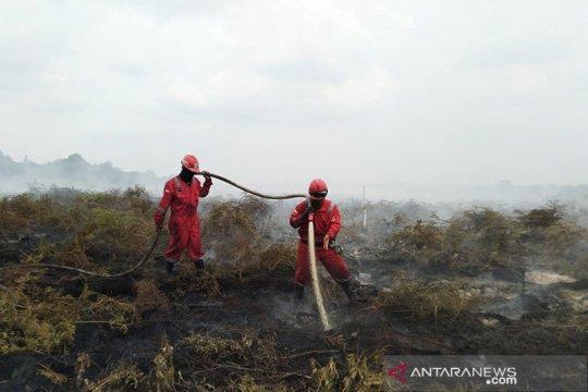 Lahan gambut Rimbo Panjang-Riau terbakar, tim berjibaku memadamkan