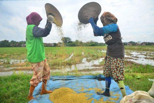Komisi IV DPR tolak kebijakan impor beras, prioritaskan beras lokal