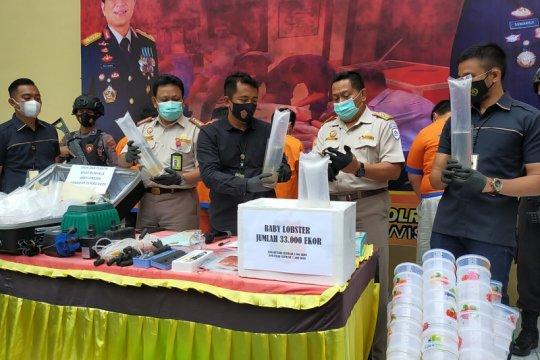 Polresta Sidoarjo gagalkan pengiriman 33 ribu benur ilegal