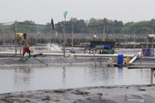 KKP yakin intensifikasi dapat lesatkan produktivitas tambak udang