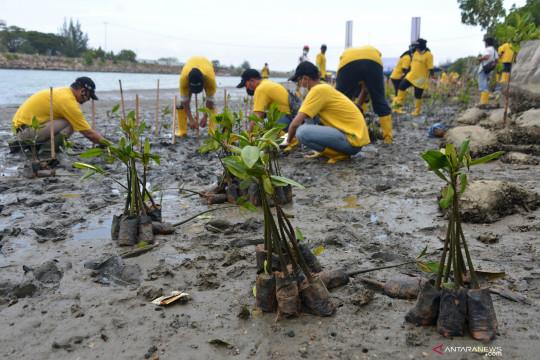 Peneliti sebut konflik lahan jadi kendala rehabilitasi mangrove kritis