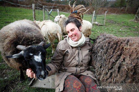 Peternakan Jerman tawarkan domba untuk dipeluk atasi kesepian