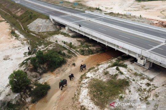Terowongan perlintasan gajah di Tol Pekanbaru-Dumai