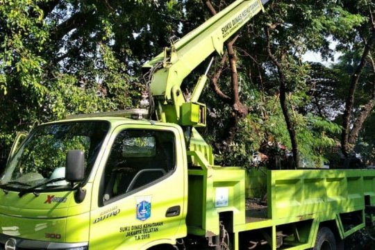 Bahayakan warga, Pemkot Jakarta Selatan pangkas pohon rawan tumbang