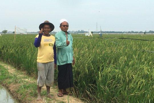 Petani Rorotan Jakarta Utara apresiasi ide ATM Beras Cilincing