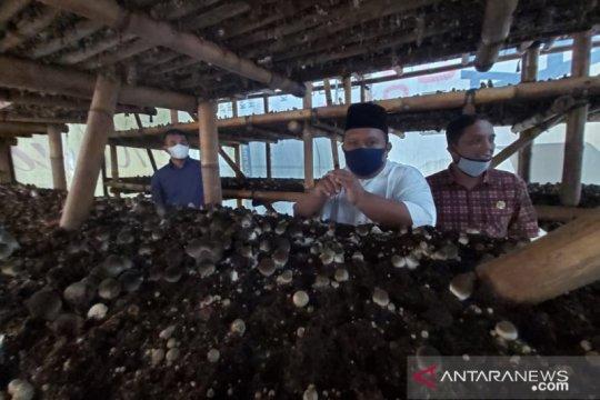 Kulon Progo diminta dampingi pembudi daya jamur merang