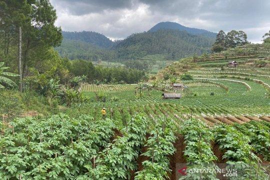 FAO: Restorasi hutan bantu pulihkan kesehatan dan kesejahteraan