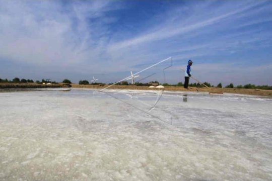Impor datang petambak garam meradang