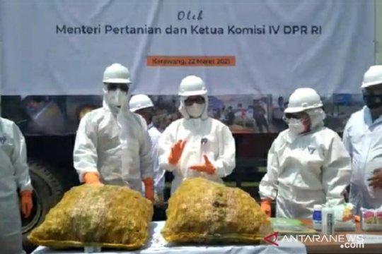 Badan Karantina Pertanian musnahkan 108 ton jahe impor