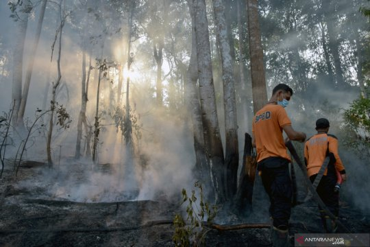 Satgas Riau fokus padamkan karhutla di Bengkalis dan Pelalawan