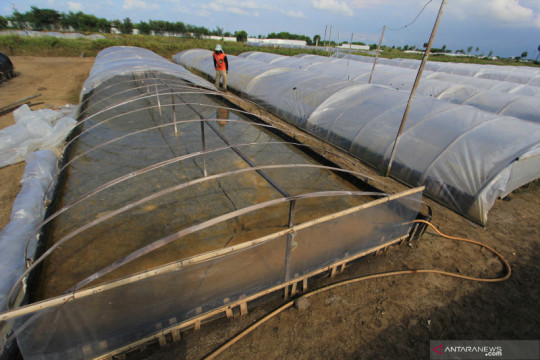 Kiara soroti ketergantungan RI terhadap impor garam