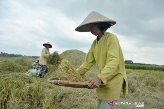 Tingkatkan produksi gabah, Sumsel optimalkan lahan di tiga kabupaten