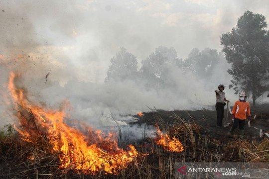 BPBD Riau: Titik api karhutla di Riau turun