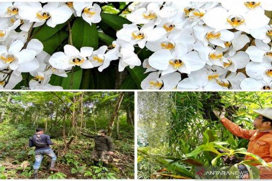Taman Anggrek Meratus miliki koleksi ratusan spesies anggrek alam