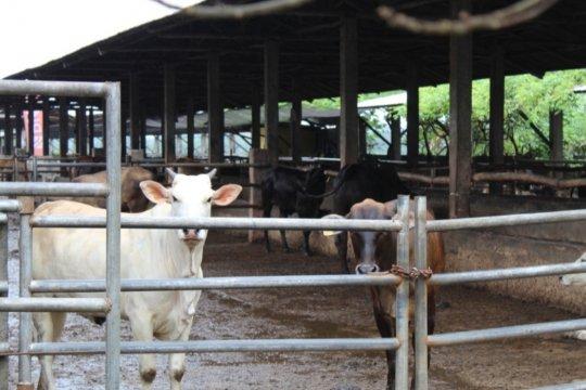 Anggota Komisi VI apresiasi rencana akuisisi peternakan sapi Belgia