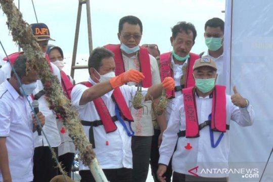 Menteri Trenggono ingin jadikan Indonesia pembudidaya lobster terbaik