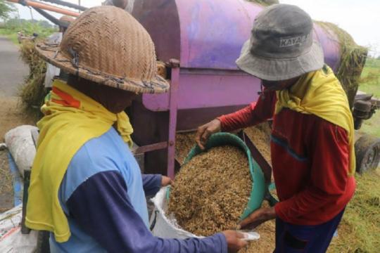 Optimalkan sektor pertanian demi dorong pemulihan ekonomi