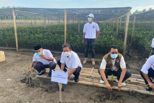 KKP targetkan rehabilitasi mangrove 56 ha di NTB sebelum Lebaran