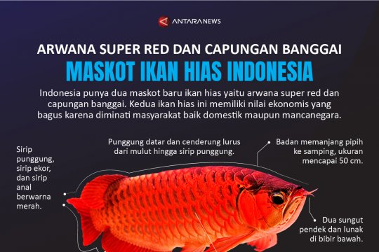 Maskot ikan hias Indonesia