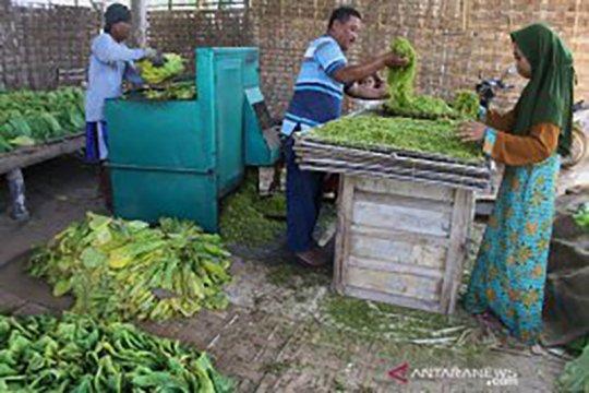 Asosiasi: Pemerintah harus melindungi petani dan industri tembakau