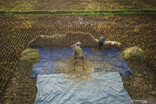 BPS: Produksi padi alami kenaikan 0,14 persen hingga September 2021