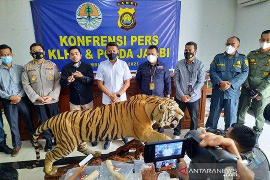 Populasi Harimau dan Gajah mengkhawatirkan akibat perburuan liar