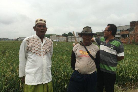 Lokasi TPU Rorotan masih lahan produktif untuk pertanian